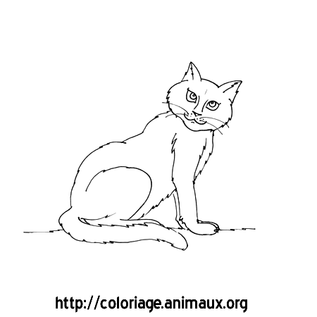 Chat tete tournee coloriage chat tete tournee sur coloriage animaux org - Tete de chat a colorier ...