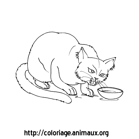 Coloriage chat grogne