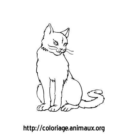 Coloriage chatte assise