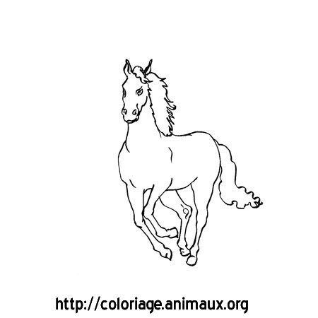Coloriage cheval galope