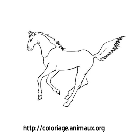 Coloriage cheval court