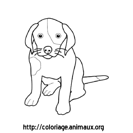 Chiot assis coloriage chiot assis sur coloriage animaux org - Chiot coloriage ...