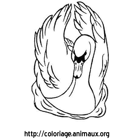 Coloriage cygne yeux noirs