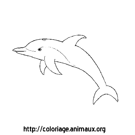 Coloriage image dauphin