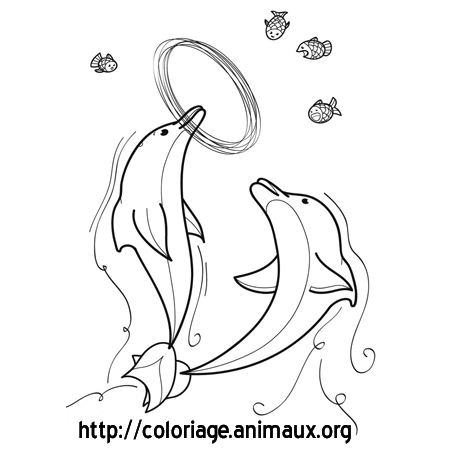 Coloriage dauphins jouent