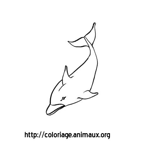 Dauphin nage vers le bas coloriage dauphin nage vers le - Dauphin dessin couleur ...
