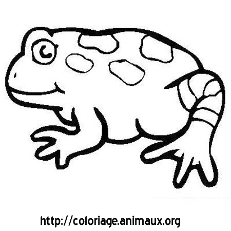 Coloriage image grenouille