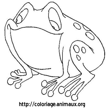 Coloriage grenouille grosse