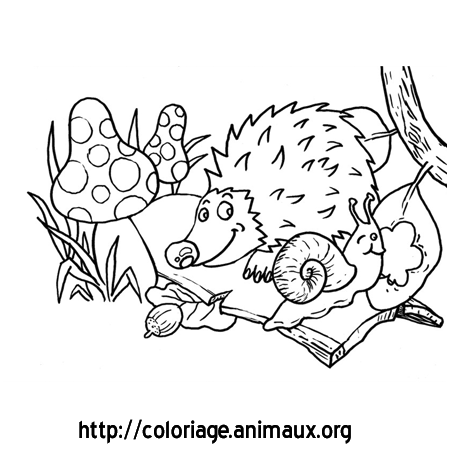 Herisson et escargot coloriage herisson et escargot sur - Coloriages escargot ...