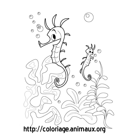 Coloriage hippocampes