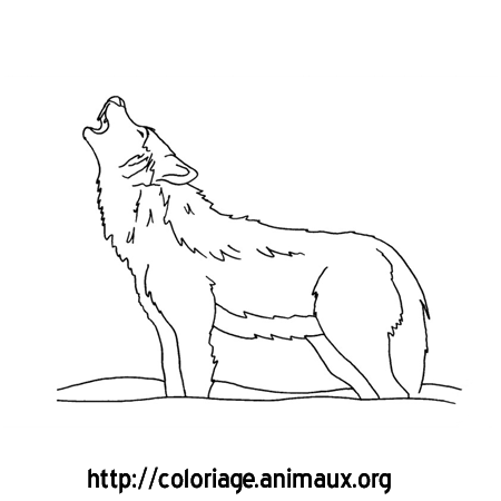 Dessin loup related keywords dessin loup long tail - Dessin a imprimer loup ...