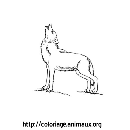 Funny pictures images photos - Coloriage loup ...