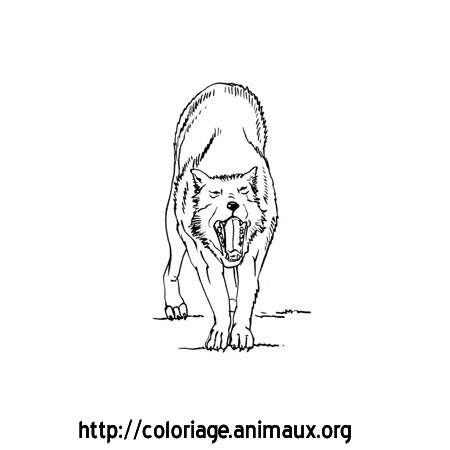 Coloriage loup baille