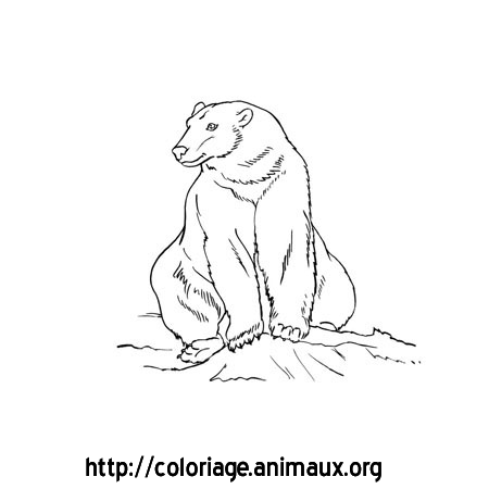 Ours Assis Coloriage Ours Assis Sur Coloriage Animaux Org