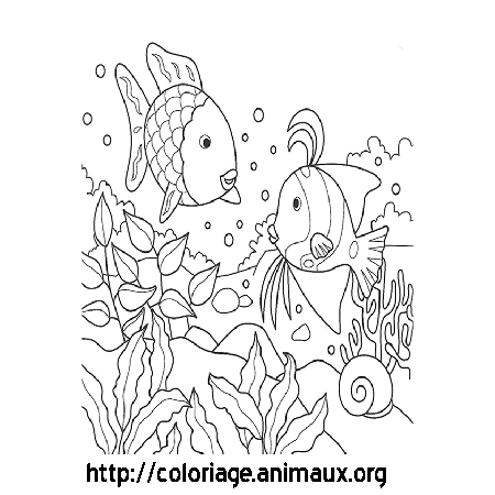 Poissons et coquillage coloriage poissons et coquillage sur coloriage animaux org - Dessin coquillage ...