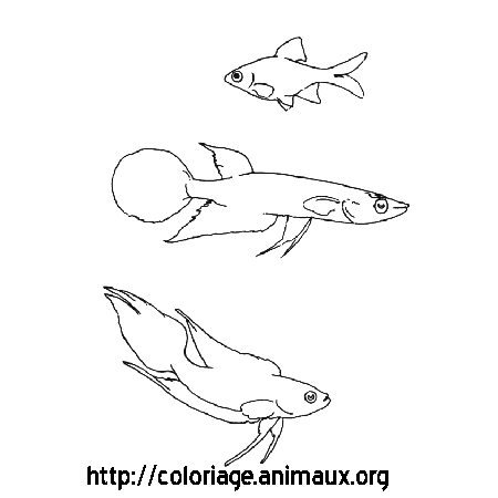 Coloriage poissons nageant