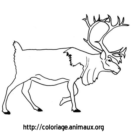 Renne coloriage renne sur coloriage animaux org - Renne coloriage ...