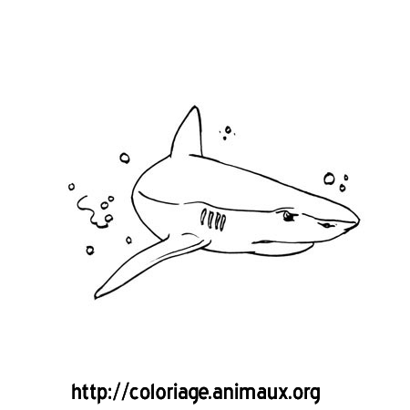 Coloriage requin nage