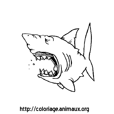 Coloriage requin baille