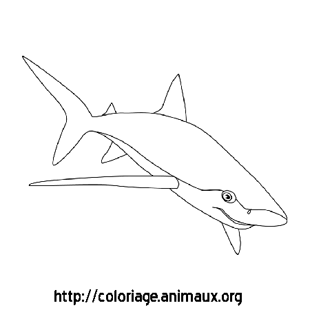 Coloriage image requin