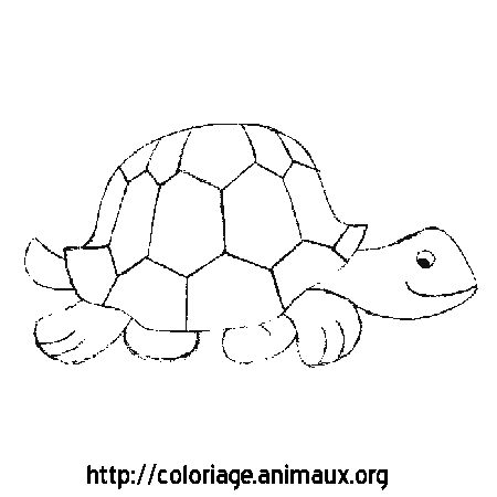 Coloriage image tortue