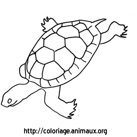 Coloriage tortue nage