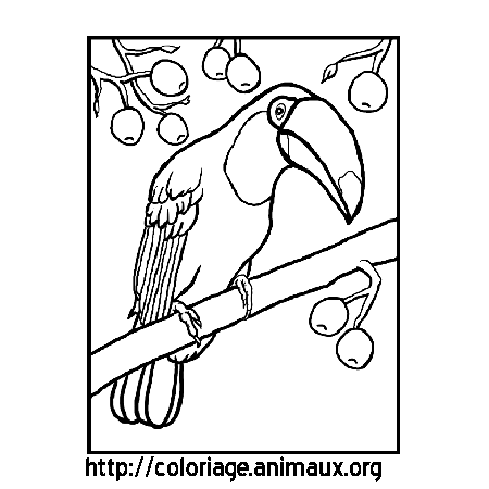 Coloriage image toucan