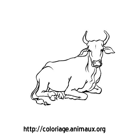 Coloriage vache assise